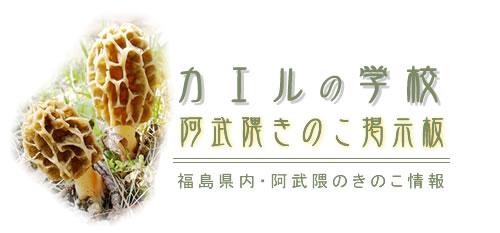 カエルの学校・阿武隈きのこ掲示板